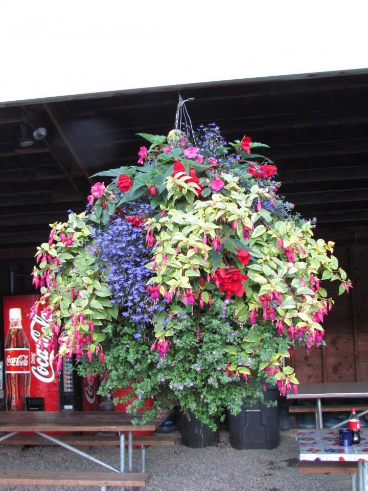 Hanging Basket Mix Shade