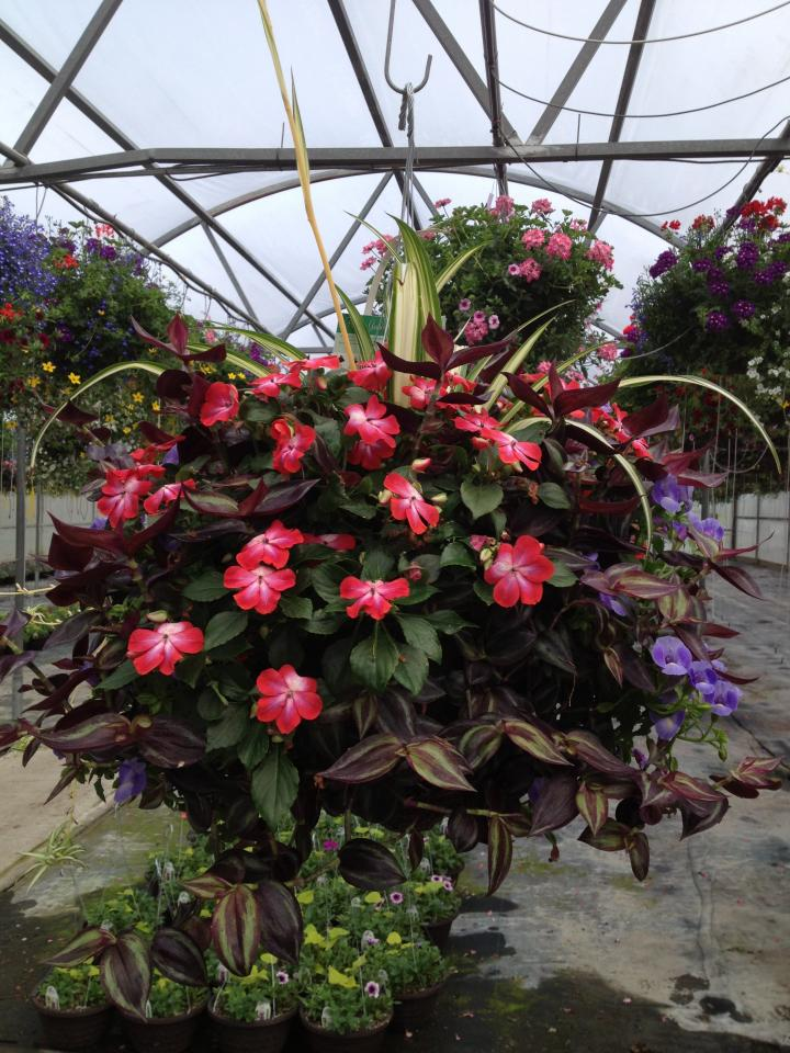 Hanging Basket Mix Shade