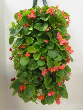Begonia Wallpouch